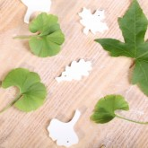 Cookie cutter ornaments - my personal favorite is the ginkgo biloba leaf - we have two trees in our own garden