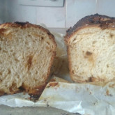 Bart  - Test 1 Sugar loaf hybride version