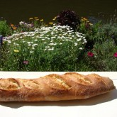 Darna Weinstein -Weekend Bakery recipe baguettes slashed with w/e bakery lame pic 1 all four pic 2 on the window sill